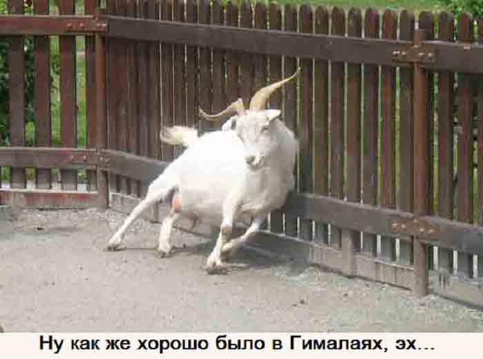 koza-v-depressii